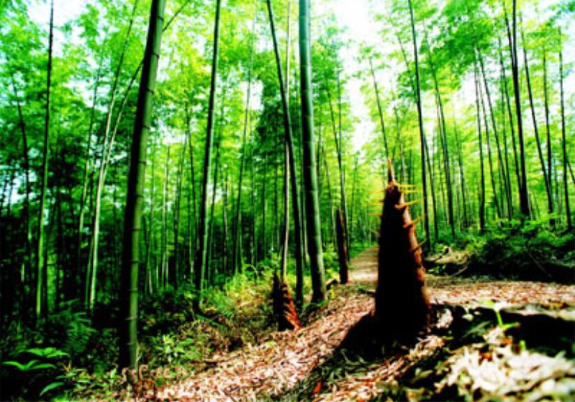 微信头像风景竹林